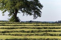 сено лета делая ландшафт поля в сельской сельской местности Стоковые Изображения RF