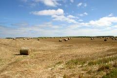 сено полей порук Стоковая Фотография RF