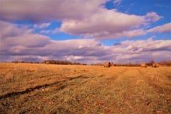 сено поля золотистое Стоковые Изображения