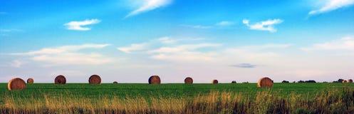 сено поля панорамное Стоковое Изображение