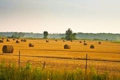сено поля порук Стоковые Изображения