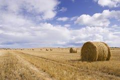 сено поля шариков Стоковое Фото