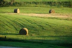 сено поля Стоковая Фотография