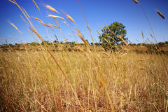 сено поля Стоковое Изображение