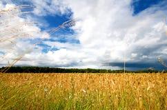 сено поля Стоковые Изображения RF