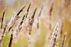 сено поля Стоковое Фото