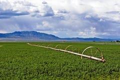 сено поля Стоковое Изображение RF