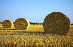 сено поля bale земледелия Стоковые Фото
