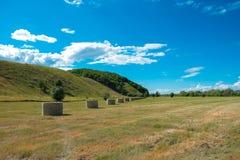 сено поля bales круглое Стоковое фото RF