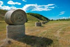 сено поля bales круглое Стоковые Изображения