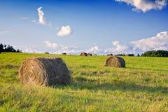 сено поля bales Стоковые Фото