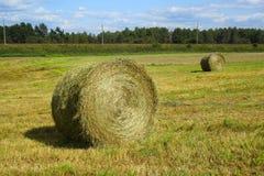сено поля bales Стоковая Фотография RF