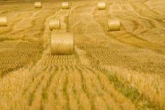 сено поля bales Стоковая Фотография
