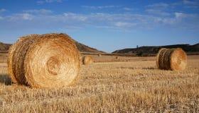 сено поля bales Стоковые Изображения RF