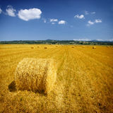 сено поля bales Стоковое Фото