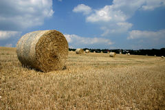 сено поля bales Стоковое Изображение