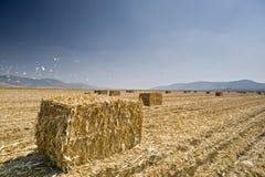 сено поля bayle Стоковое Фото