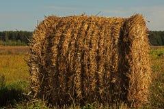 сено поля bales круглое Стоковые Фотографии RF