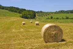 сено сельской местности стоковое изображение
