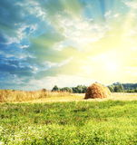 сено Стоковое Фото