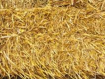сено стоковое изображение