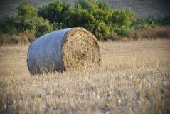 сено bale круглое Стоковые Изображения