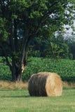 сено bale Стоковые Фотографии RF