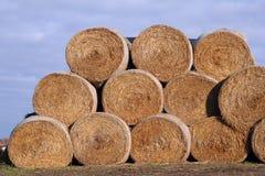 сено bales стоковое фото
