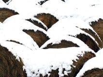 сено bales Стоковые Изображения RF