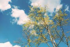 Сень высокорослых молодых деревьев день солнечный Верхние ветви вала Стоковое Фото