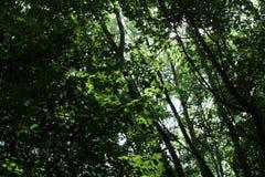 Сень дерева в лесе Стоковые Фотографии RF