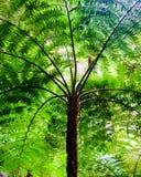 Сень дерева папоротника стоковая фотография rf