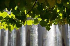 Сень листьев с фонтанами на заднем плане Стоковое Изображение