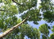 сень лиственная стоковые фотографии rf