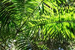Сень пальмы Стоковые Изображения RF