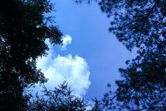 Сень сортированных деревьев частично пряча голубое небо с большим облаком стоковая фотография rf