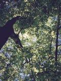 сень Стоковые Фото