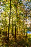 Сен дерева осени как увидено во время полдня стоковые фотографии rf