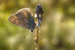 Серая бабочка Стоковые Фотографии RF