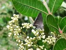 Серая бабочка! Стоковое Фото
