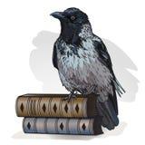 Серая ворона на книги на белой предпосылке r иллюстрация вектора