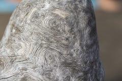 Серая деревянная предпосылка с необыкновенной текстурой Weathered посолил ствол дерева на взморье Стоковое Изображение