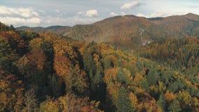 Серая извилистая дорога окруженная холмами с плотными лесами акции видеоматериалы