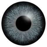 Серая иллюстрация макроса радужки глаза бесплатная иллюстрация