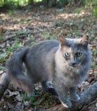 Серая листва кота осенью Стоковая Фотография