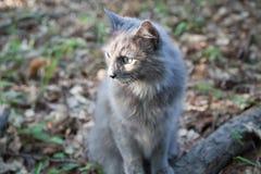 Серая листва кота осенью Стоковые Изображения RF