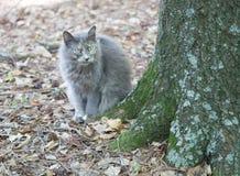 Серая листва кота осенью Стоковое Фото