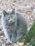 Серая листва кота осенью Стоковые Фотографии RF