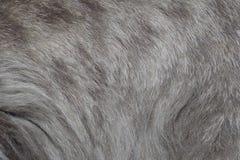 Серая и белая волнистая текстура меха Стоковое Фото