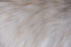 Серая коричневая текстура меха Стоковое Фото